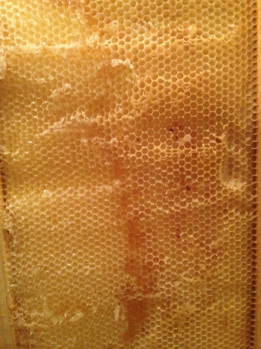 Frame after Honey was Extracted