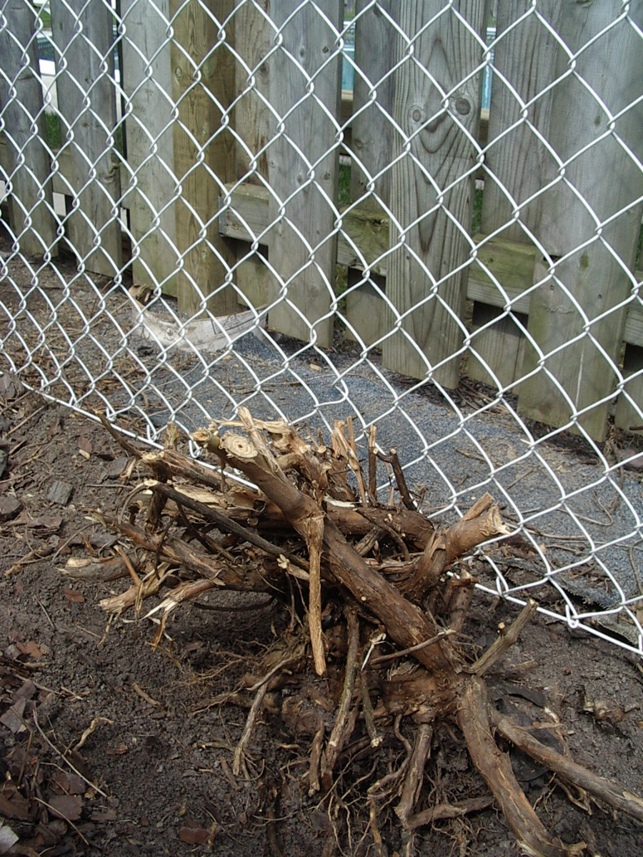 Remember, after the backhoe takes the roots out, paste the remaining roots with  Roundup or some such.   At the top of the picture, through the wooden fence, is your neighbour's pool, and you don't want the creeper creeping up through that, do you?