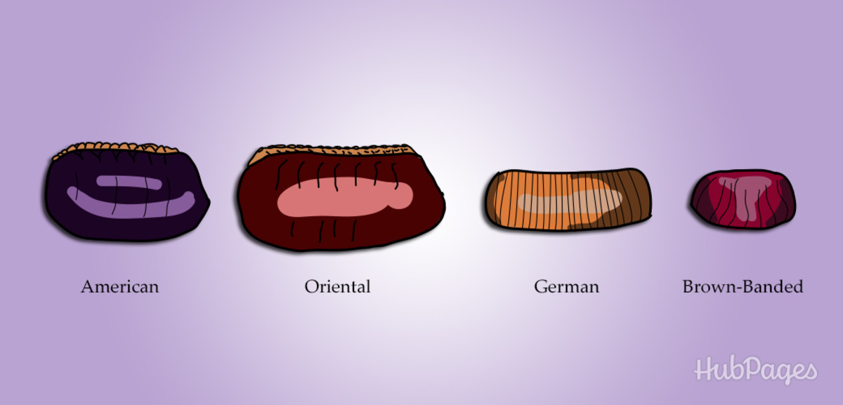 Cockroach eggs vary in size depending upon type, just like the adult insects.
