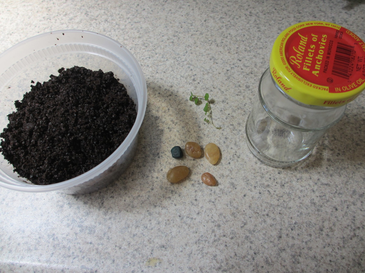 Some of my materials for making a bottle garden.