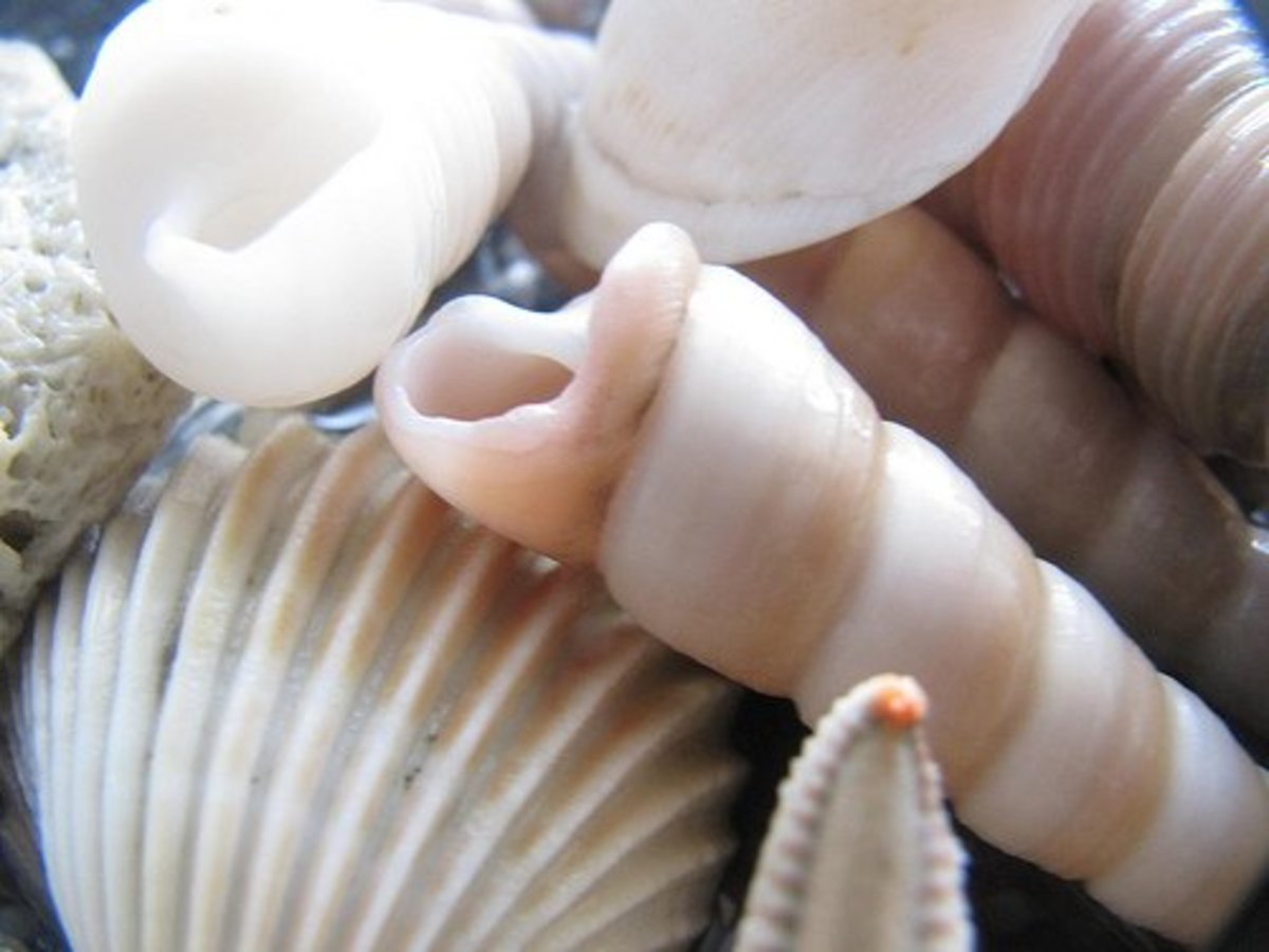Something as simple as sea shells can inspire your coastal color palette.