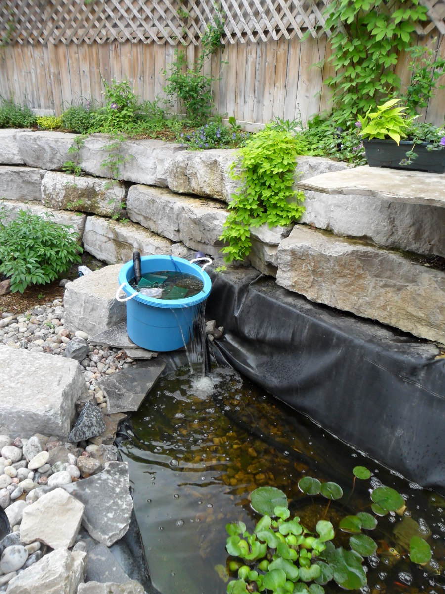 How to clear green pond water for Green water in pond