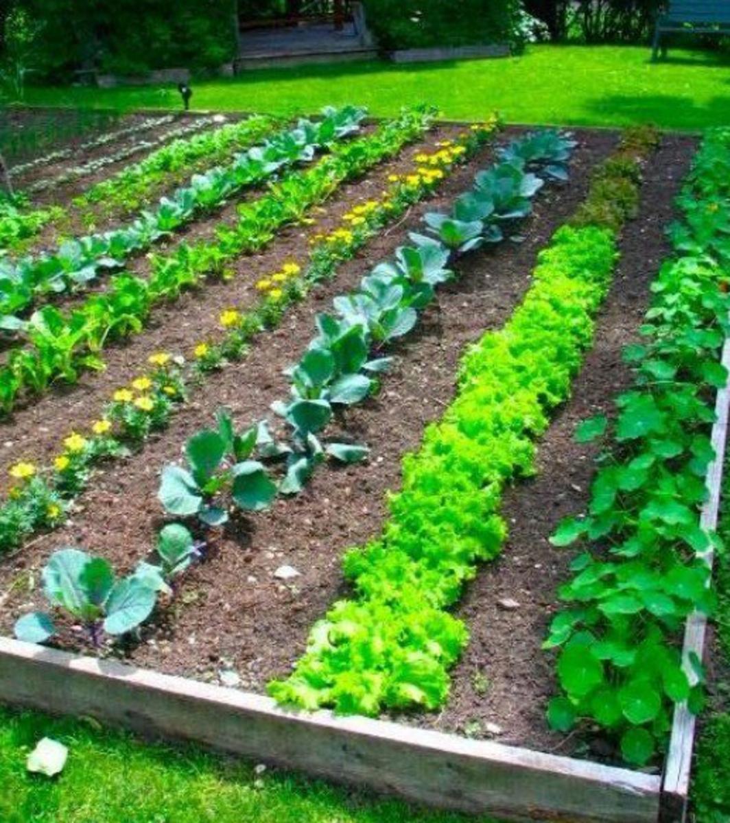 101 Gardening Secrets the Experts Never Tell You Dengarden
