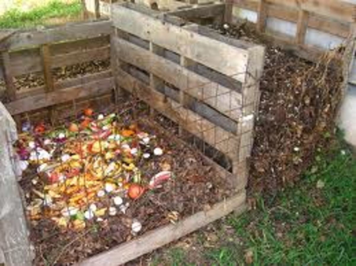 Composting, how to use a bin, or create a compost pile.