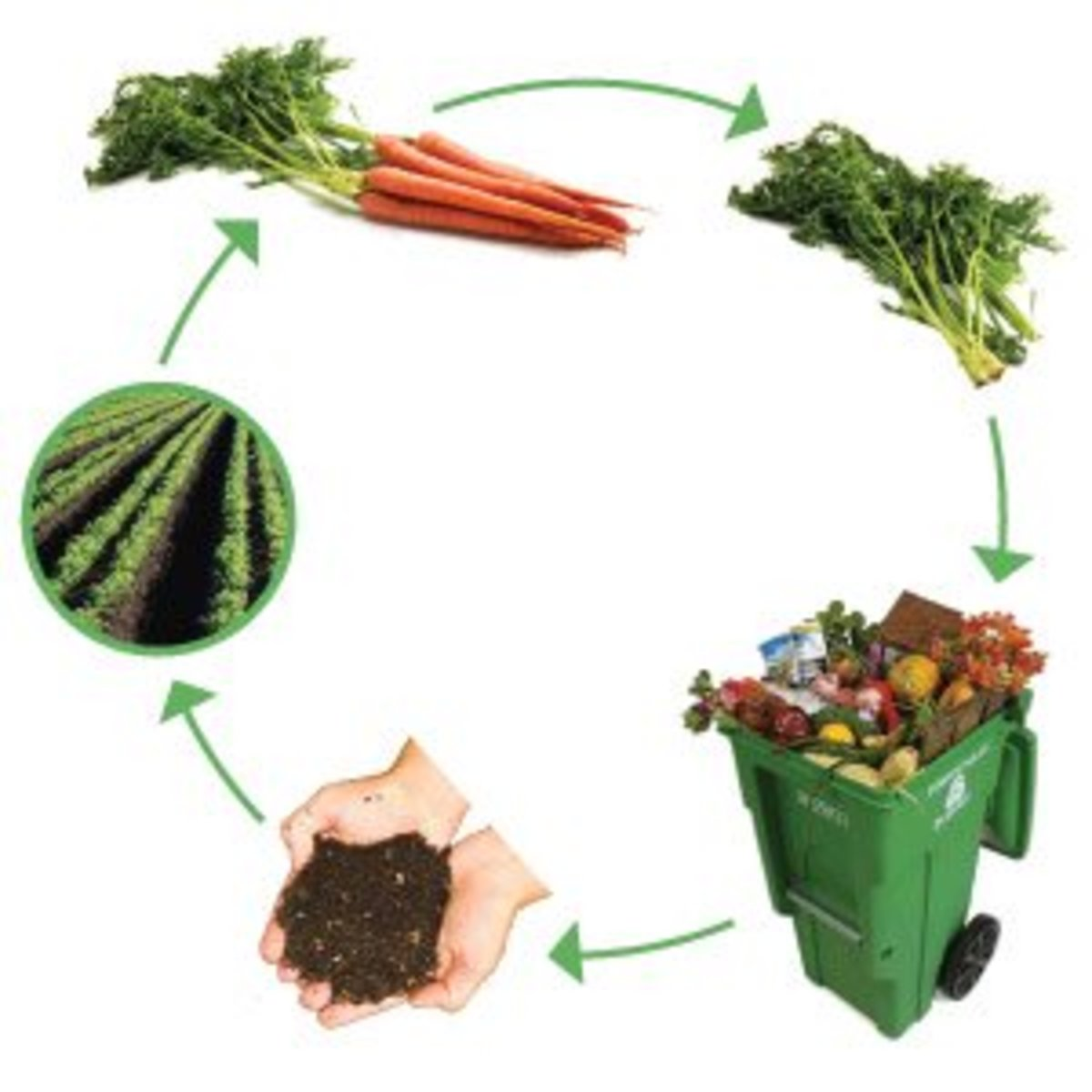 The cycle of composting