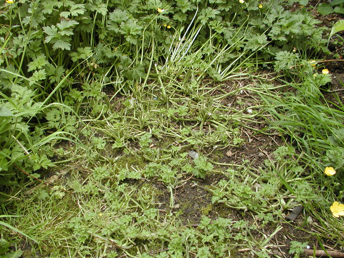All these weeds and grass need to be cleared.