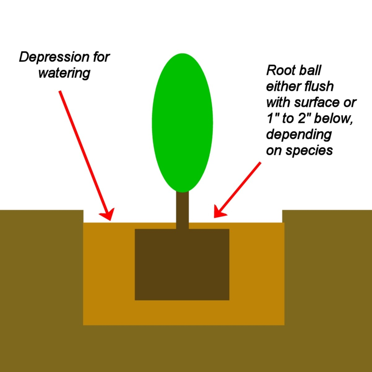 Cross section schematic of how to plant a tree