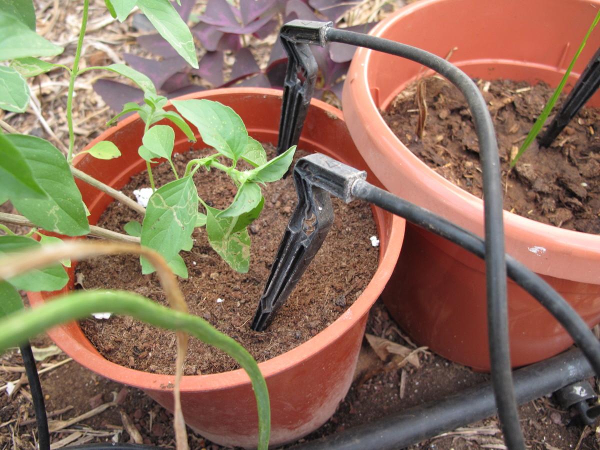 Bucket or pot gardens use spike sprayers.