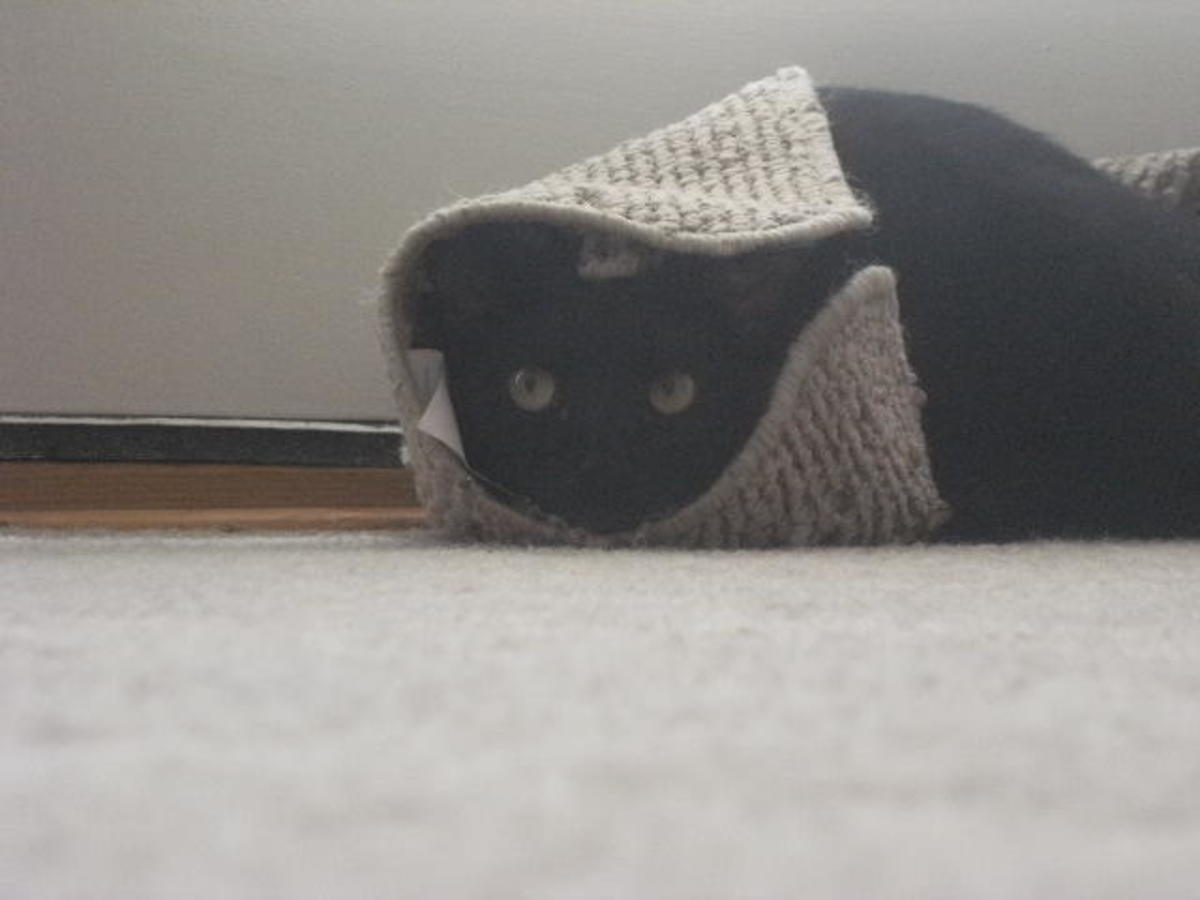 This cat is hiding because he peed on the floor again.