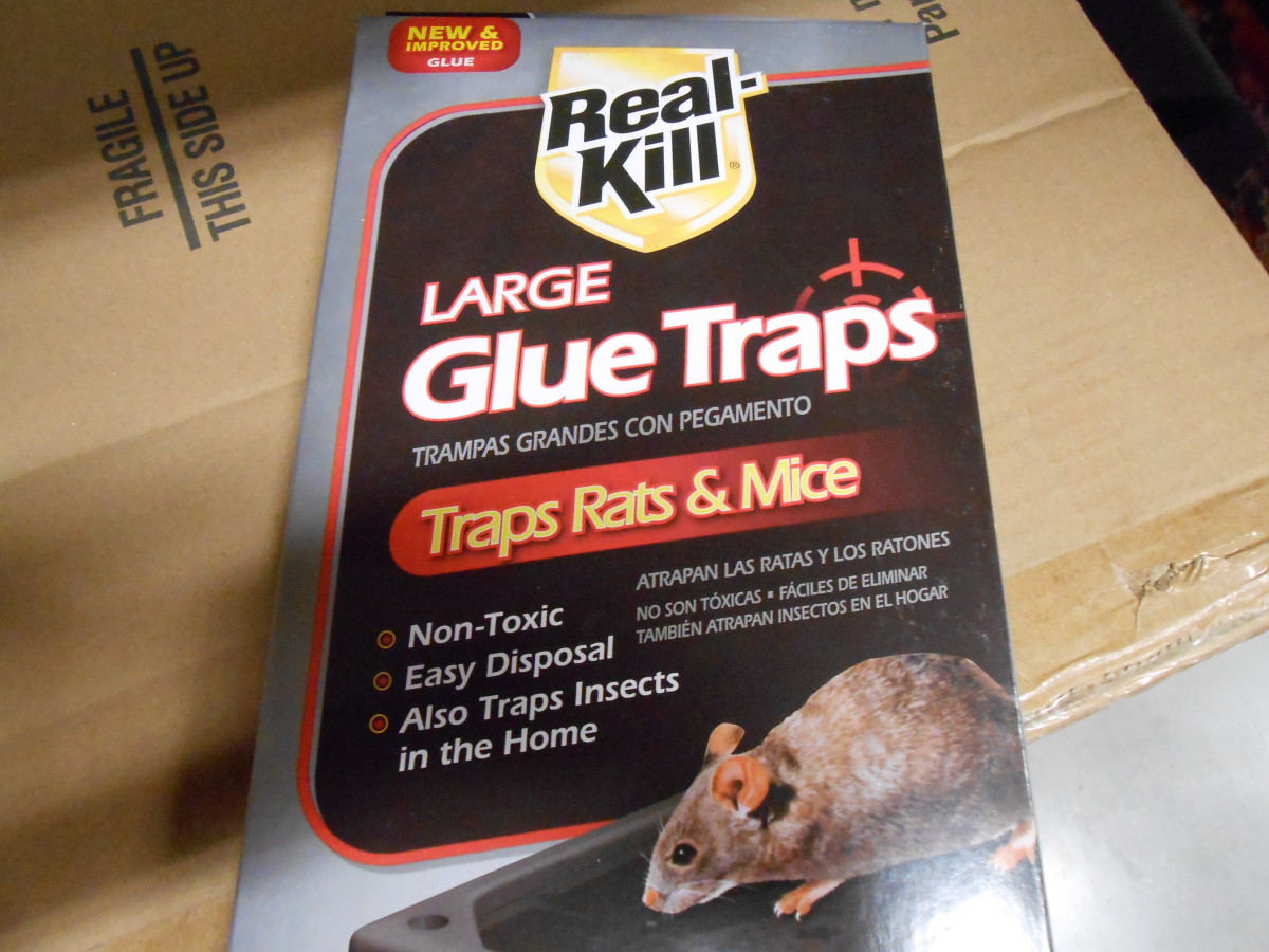 Glue board traps are available in a few different sizes and some have a peanut butter scent to lure mice.
