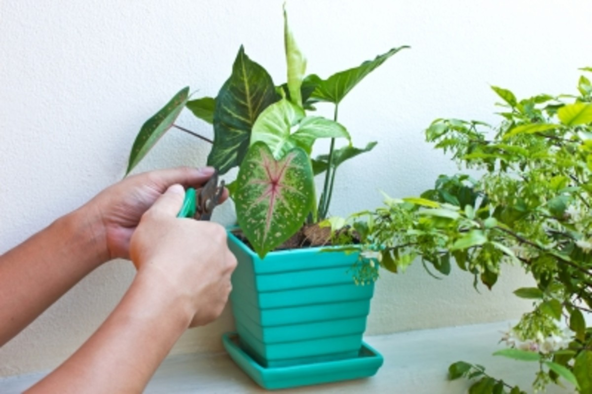 Choose wisely: Start small plants and watch them grow.