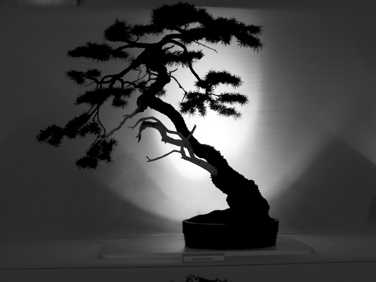 All it takes to grow your bonsai skills is a little gardening knowledge, just a hint of creativity, and most importantly, an endless amount of patience.