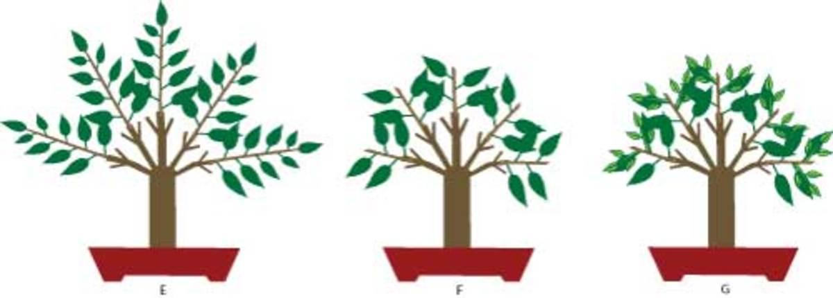Illustration of maintenance pruning.