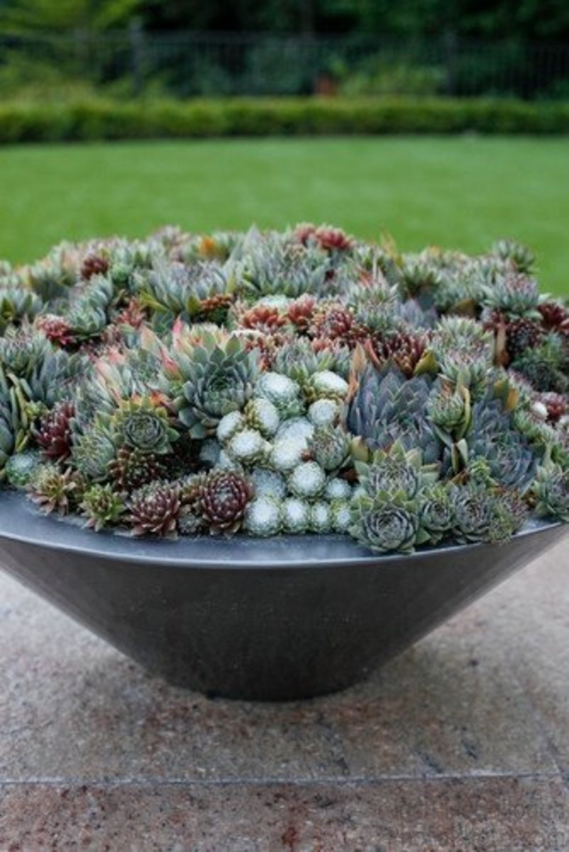 A nice big pot filled with different varieties of succulents looks great on a deck.