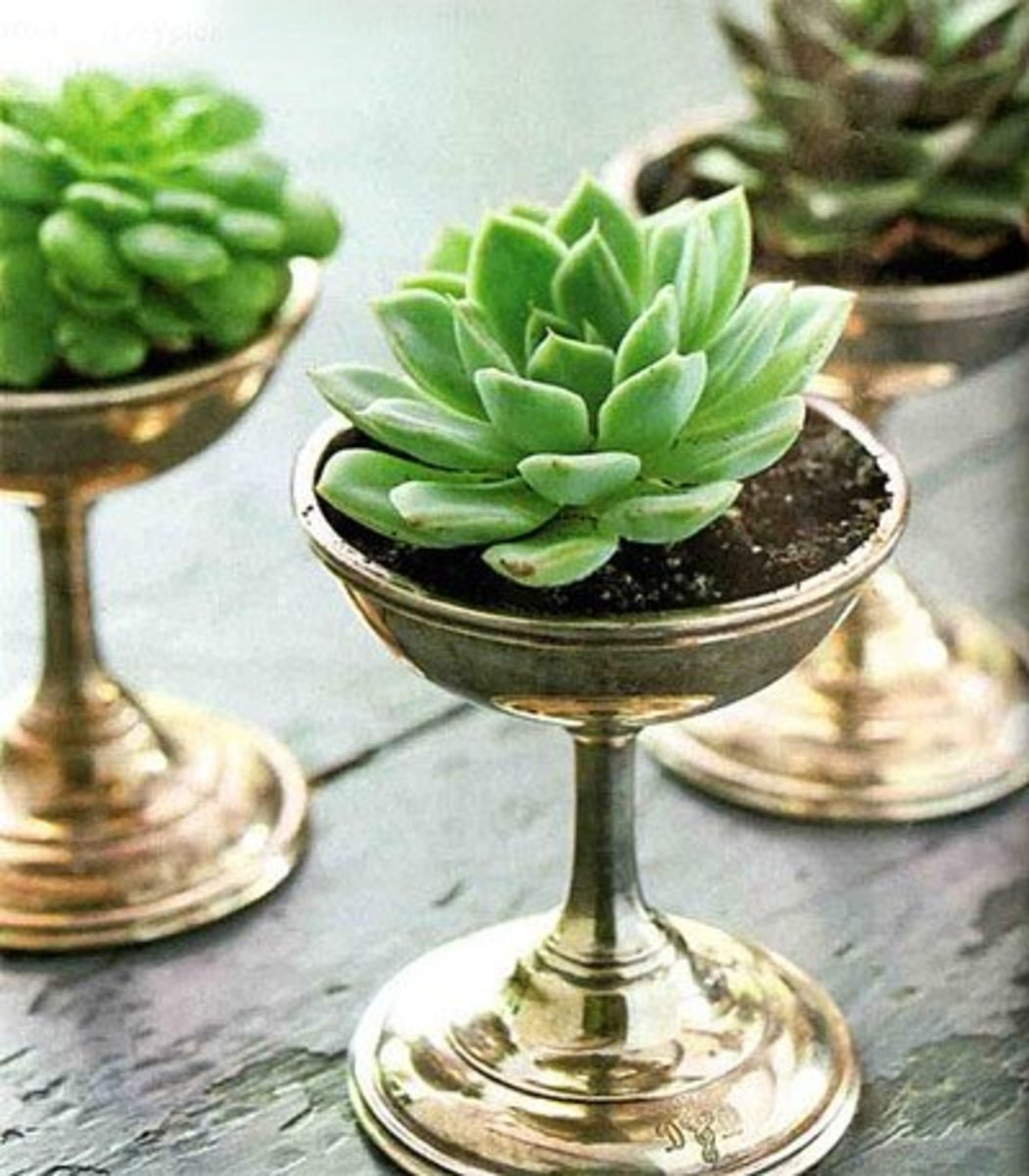 Adorable pewter glass planters for indoors. I'm not sure where the hole is in these ones, but if you put a hole somewhere inconspicuous, it will increase the time between repottings.