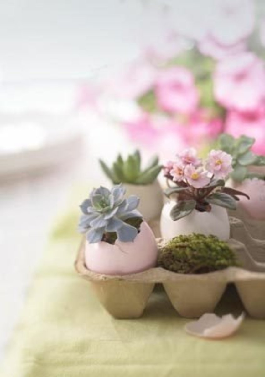Eggshells in egg cartons make interesting mini succulent planters.