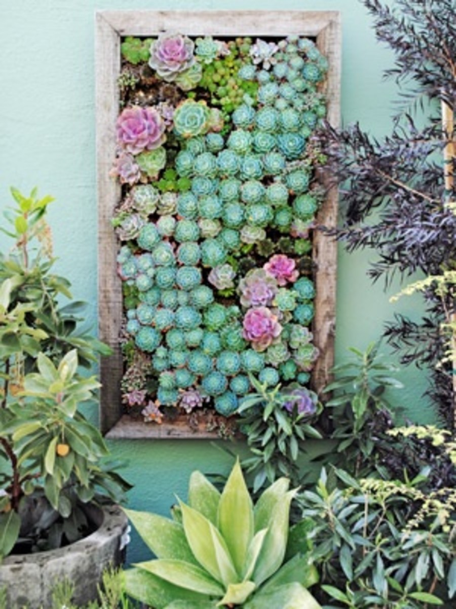 The latest trend in succulent planters is wall planters like this one. Ideal for gardens with little space!