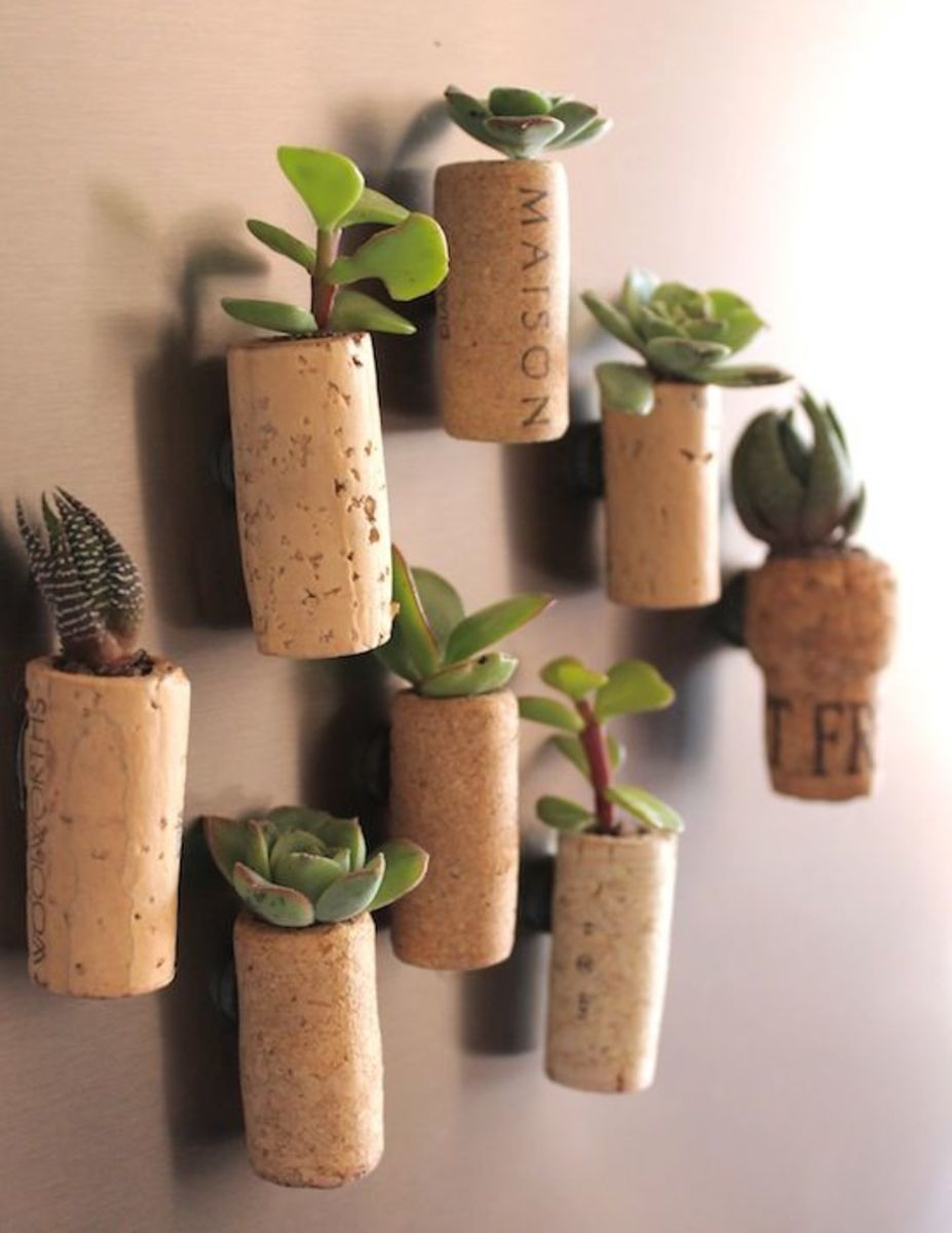 For guests only - mini cork planters (with fridge magnets attached). Repot these frequently.