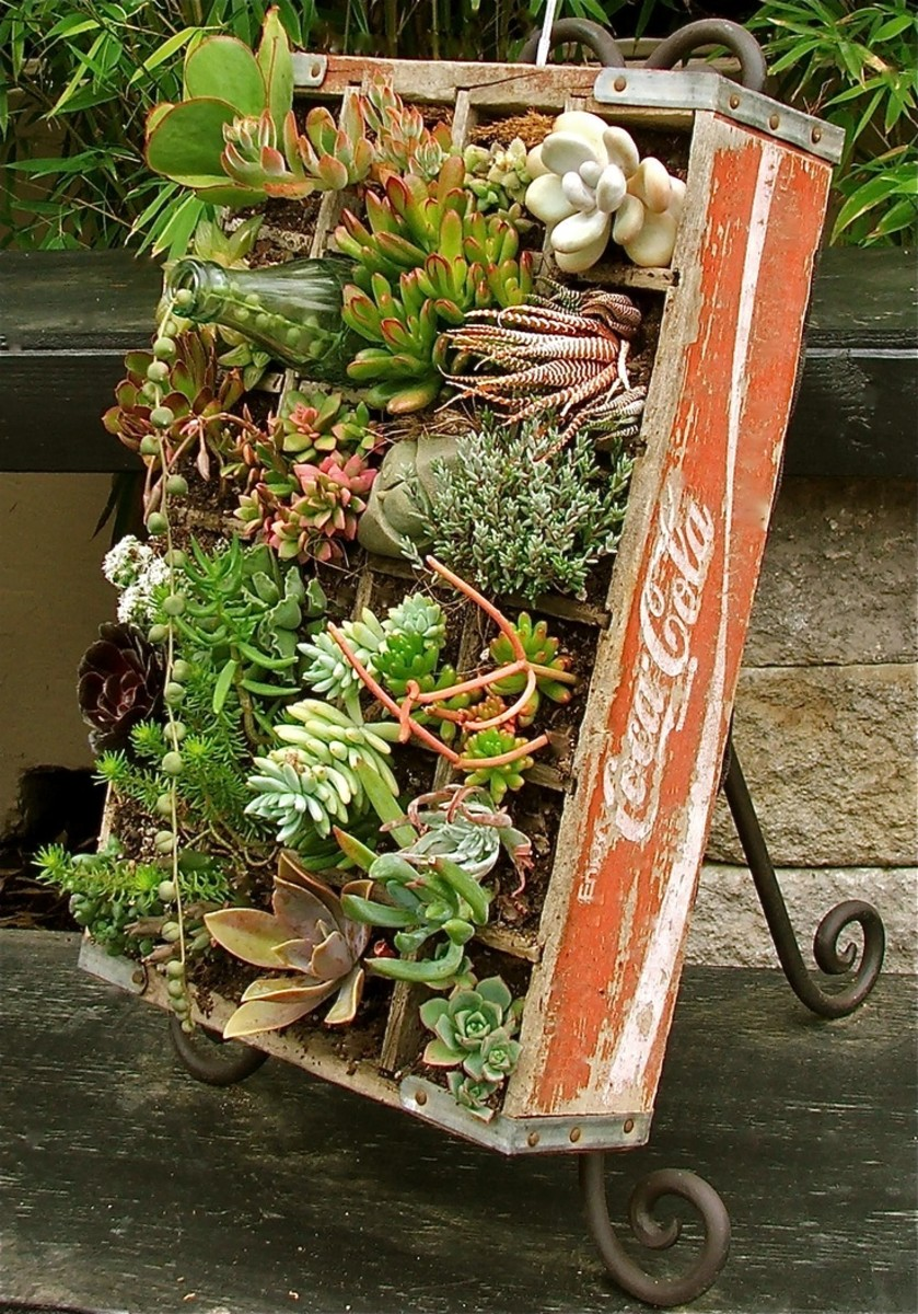 This Old Coca Cola Crate Has A Useful Second Life As Miniature Succulent Garden
