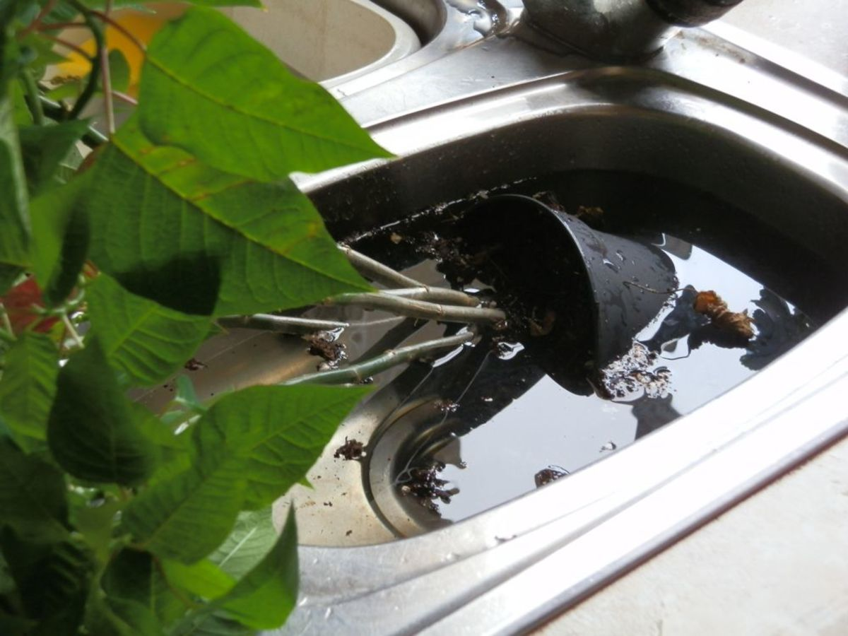 Plant pot submerged in water to give it a good soak.