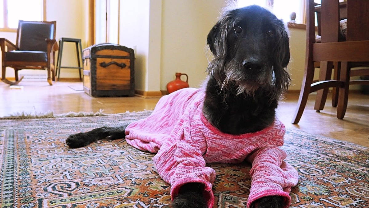 If you dress your pet in winter, make sure you use all-natural materials. Synthetics like fleece generate far more static. (Ideally, you should also use a sweater that is made for pets!)