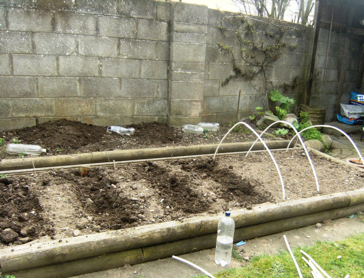 Prepare a trench in the garden to plant your onions