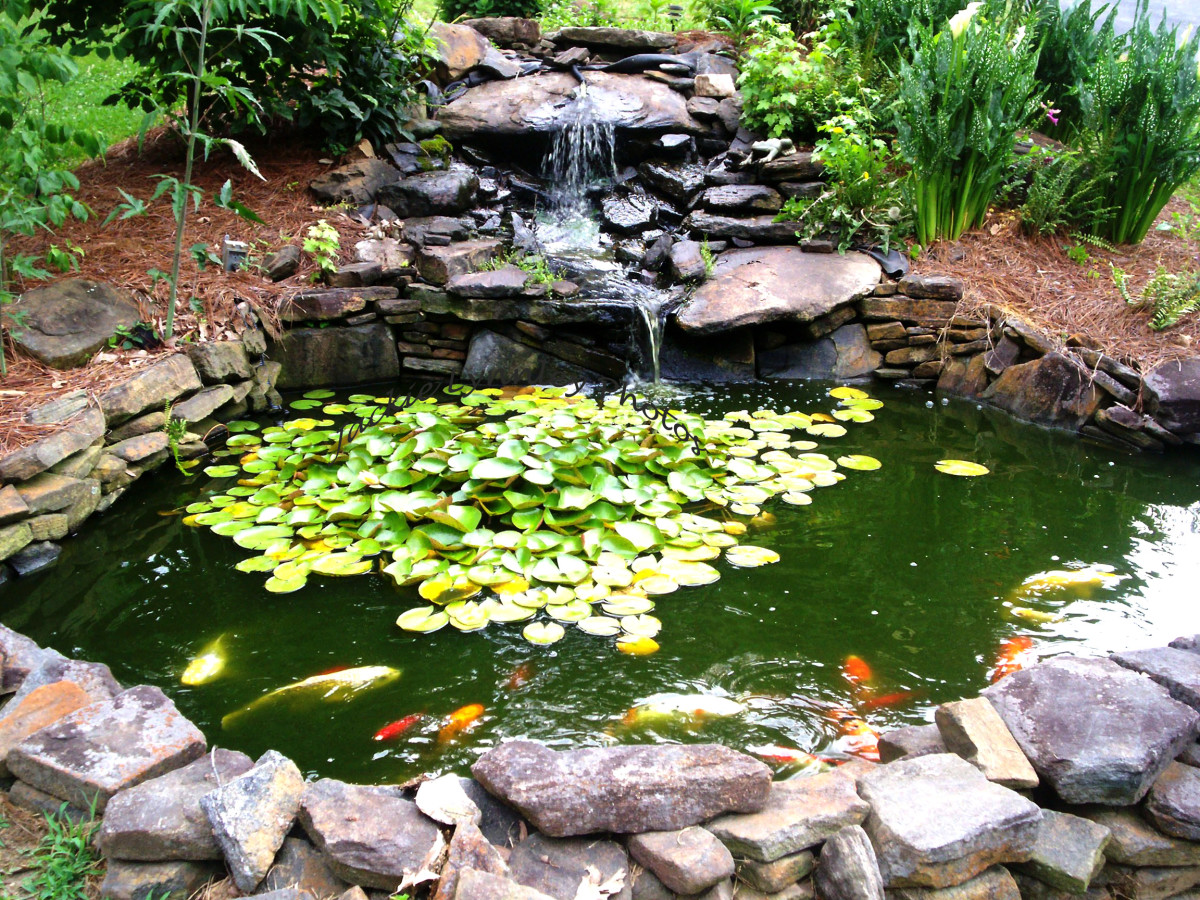 How to make a beautiful goldfish pond dengarden for Plants for around garden ponds