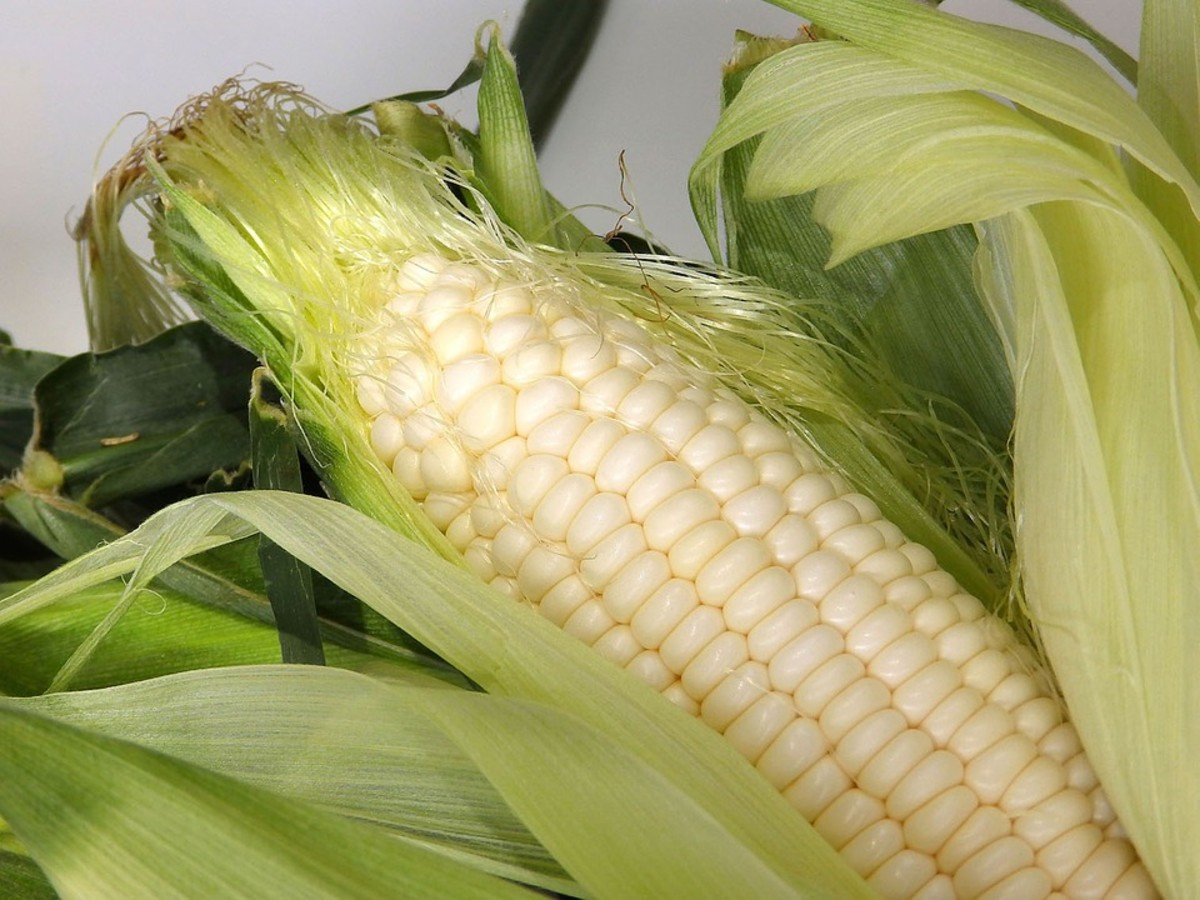 White Sweet Corn