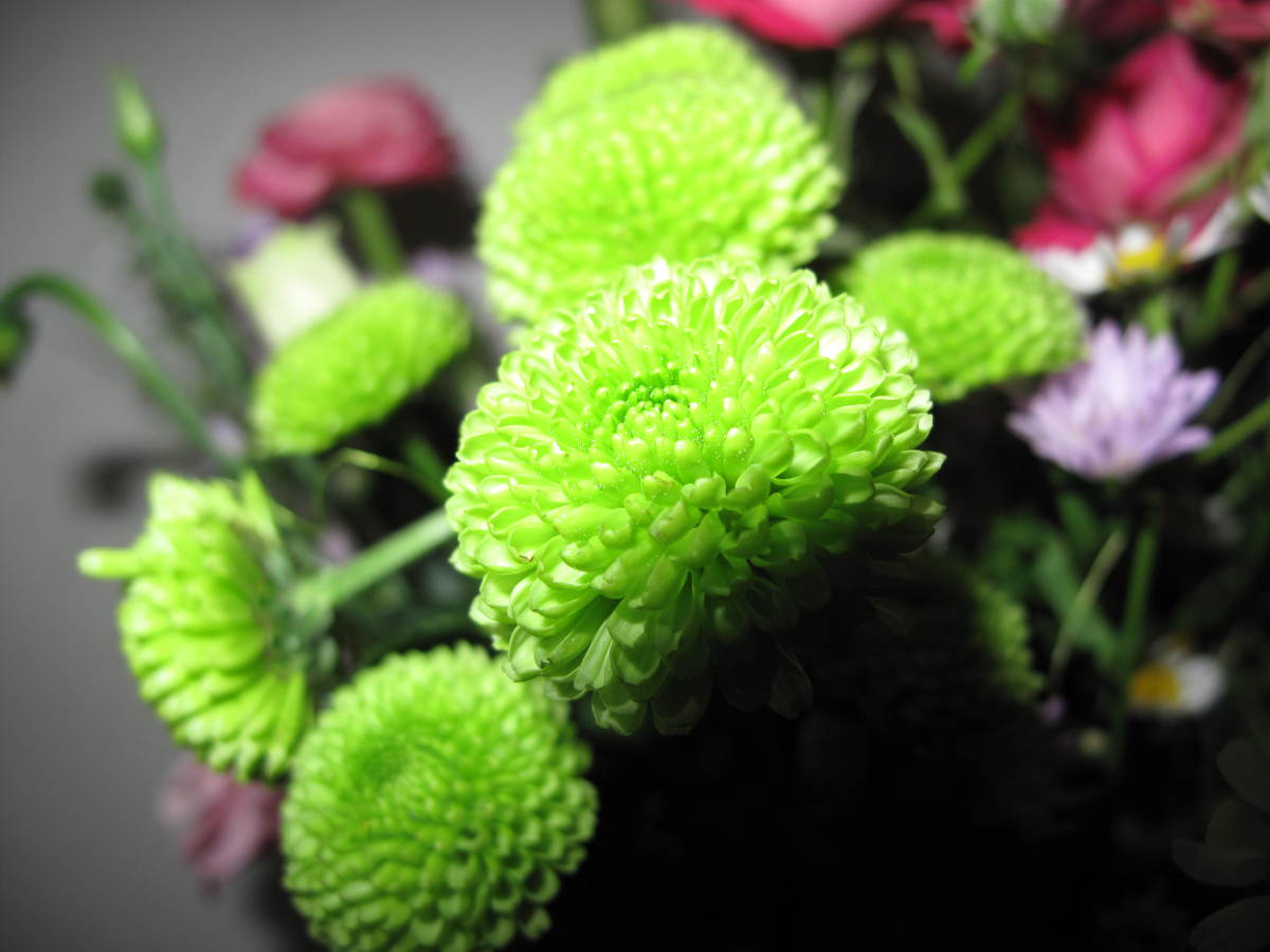 Green Flowers for Gardens and Flower Arrangements