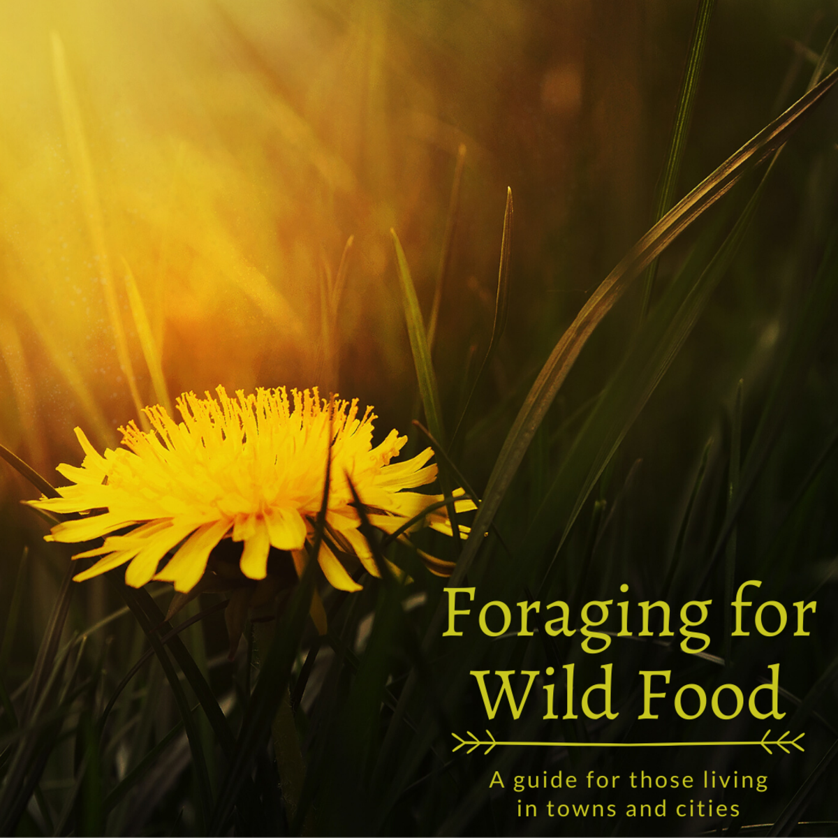 How to Forage for Wild Food in Towns and Cities