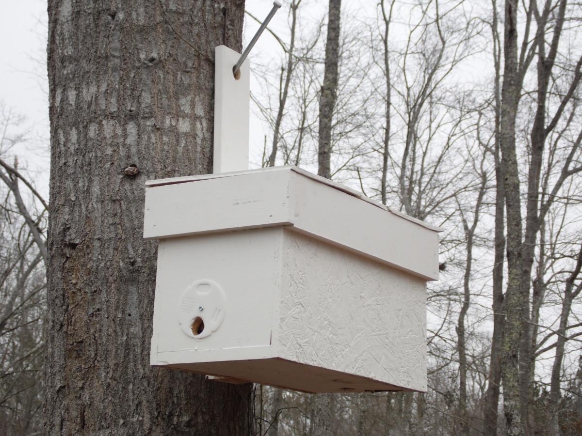 Swarm trap hanging on a big oak tree.