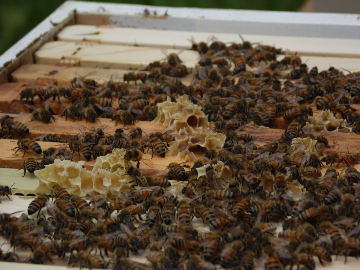 Top bars of a beehive.