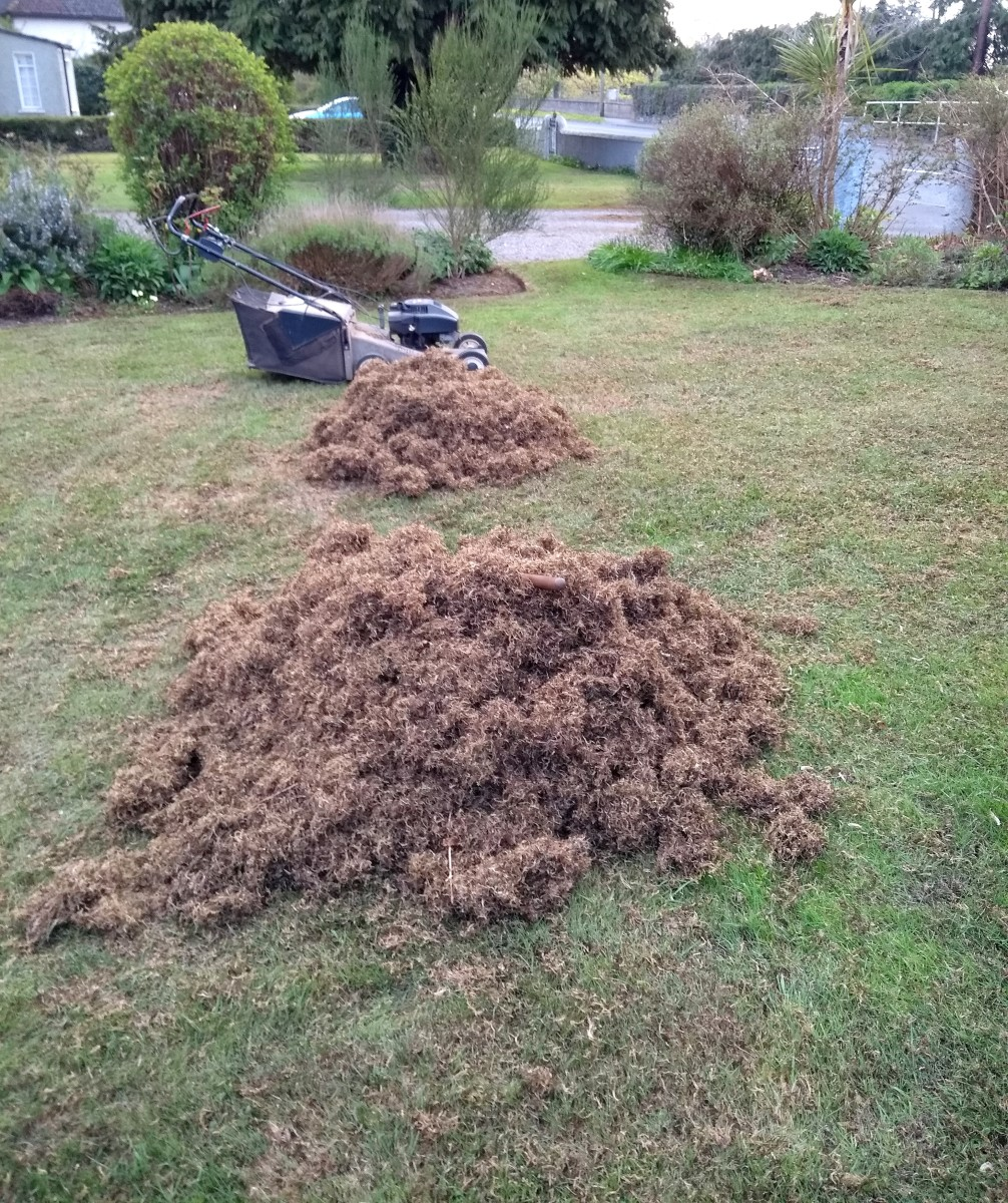 I raked this much moss out of my lawn in spring.