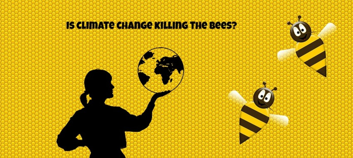 Climate change may be contributing to the death of honey bees and to colony collapse disorder.