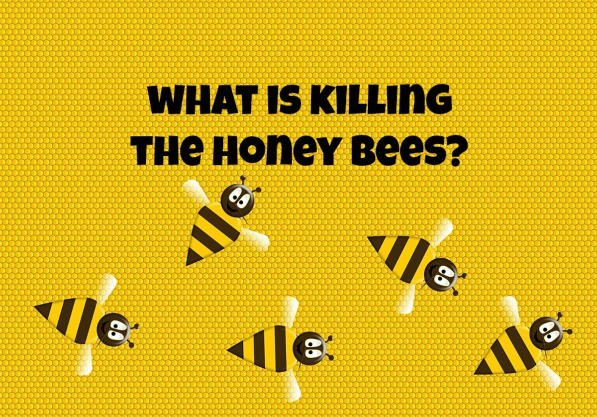 Colony Collapse Disorder is a serious problem to the existence of honey bees.
