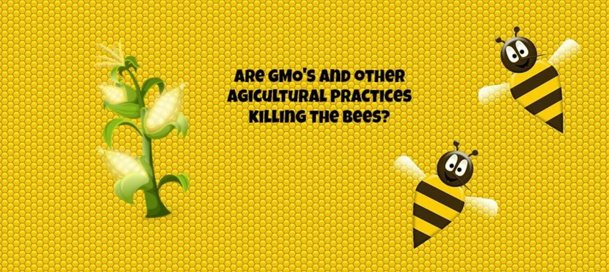 Genetically modified crops and monoculture farming may be contributing to the death of honey bees and to colony collapse disorder.