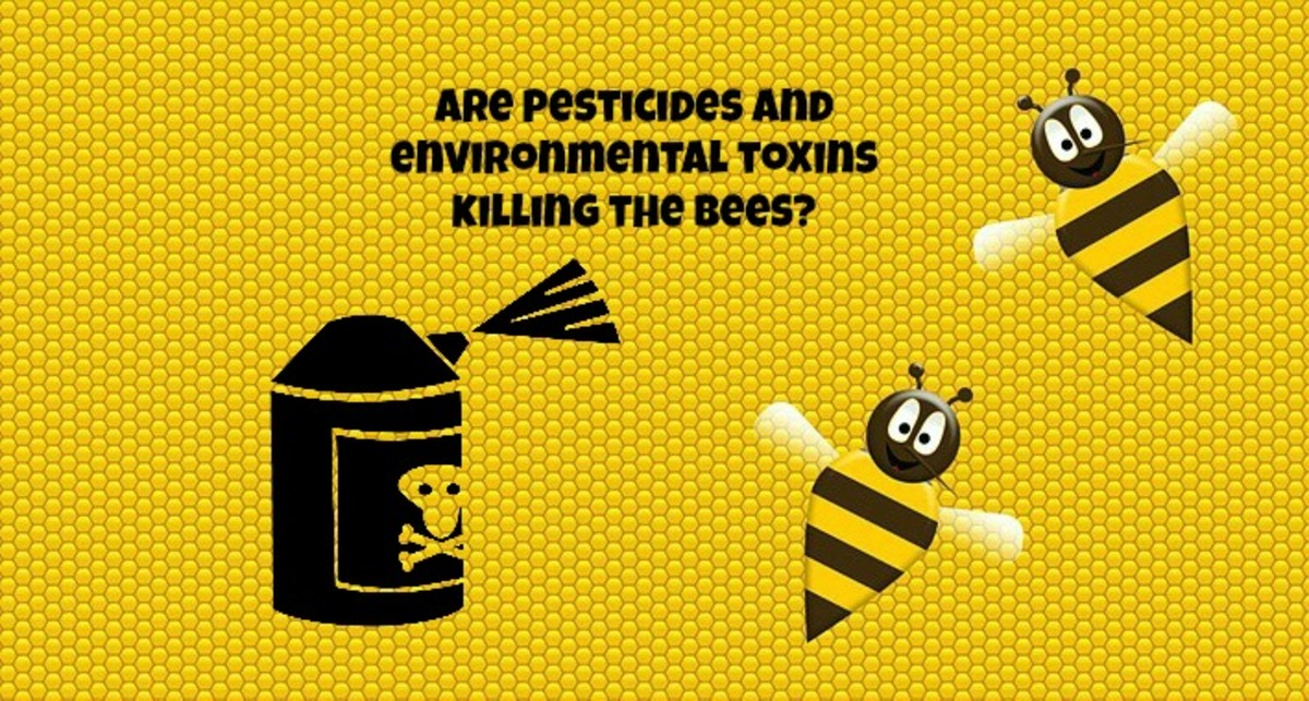 Pesticides and environmental toxins might be contributing to the death of honey bees and to colony collapse disorder.
