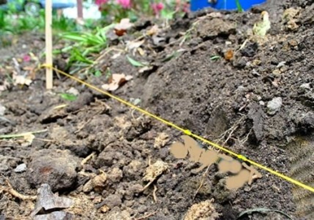A Stake and String for Marking Planting Holes