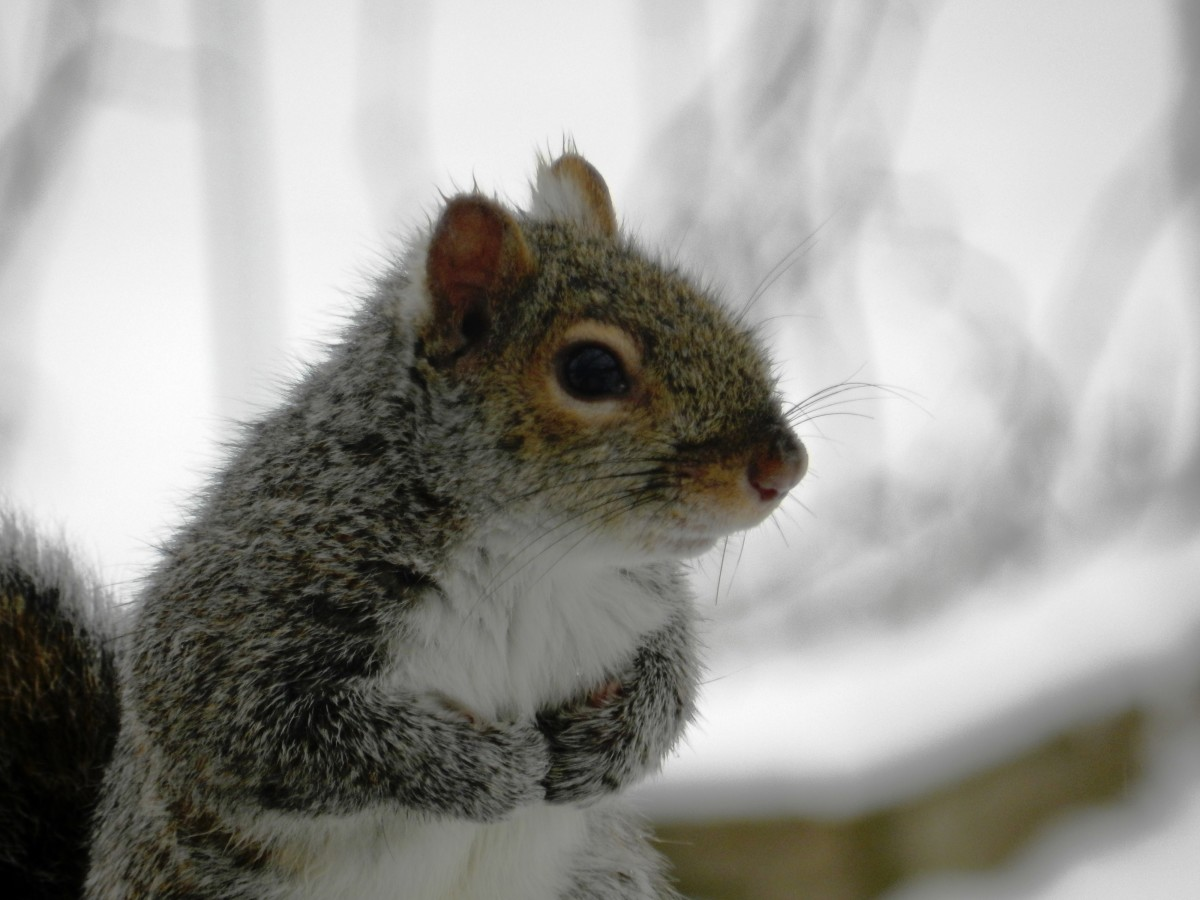 Squirrels may look innocent but left to run amok they will trash your bird feeder and cause chaos in your backyard!