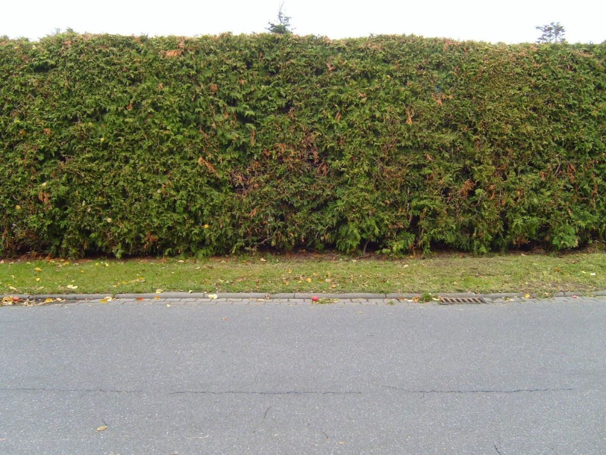 An Example of a Well-Trimmed Hedge