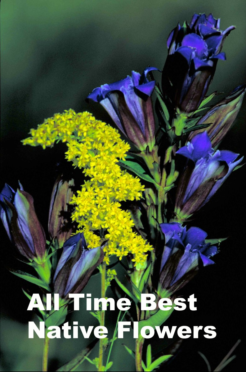 Planting These 11 Best Native Midwest Flowers Will Revive the Environment