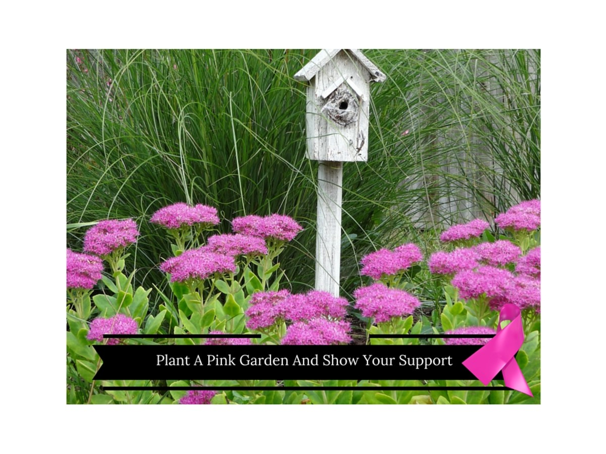 Plant a pink garden for Breast Cancer Awareness Month.