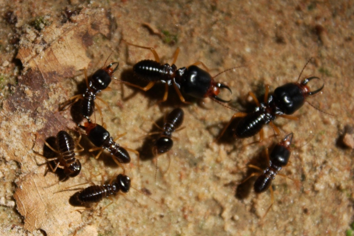 Untreated wooden windows are proned to termites