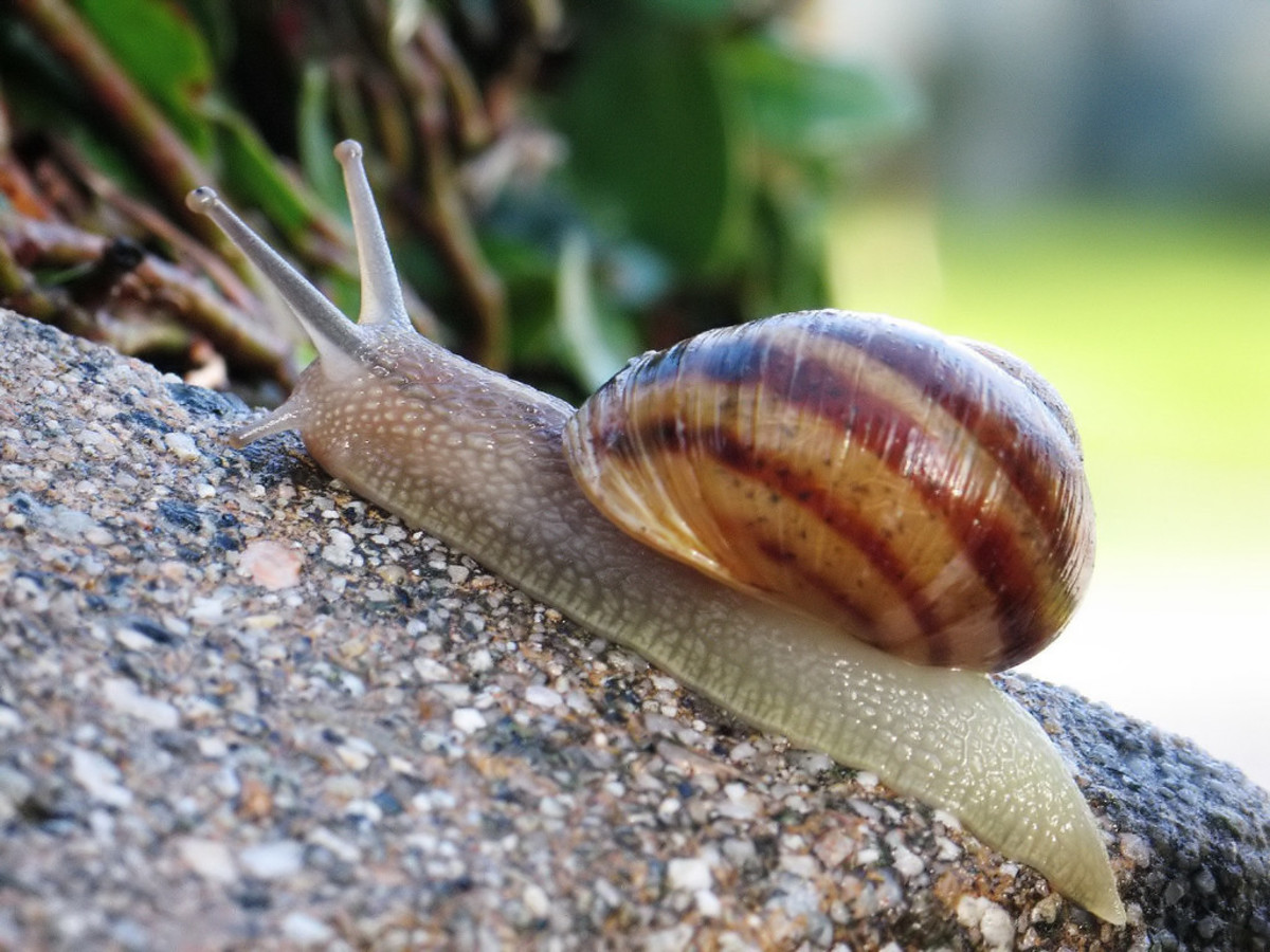 Snail On A Wet Patio Feature