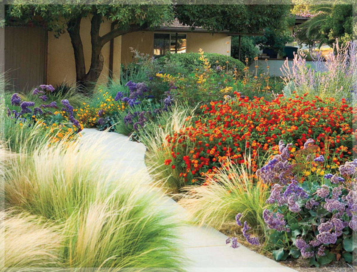 This garden uses Mexican feather grass, lantana, Russian sage, and statice.