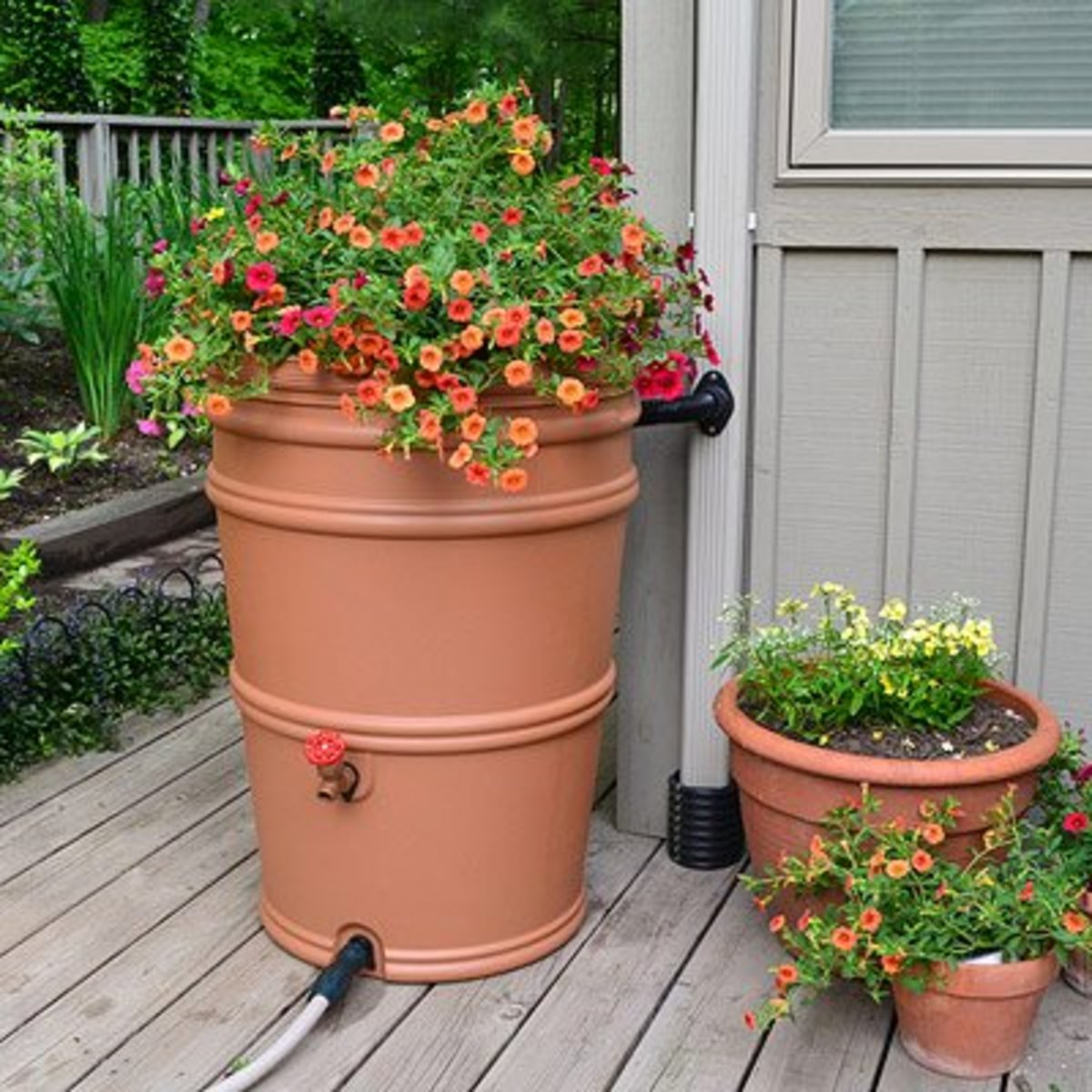 Run-off water can be harvested in attractive rain barrels.