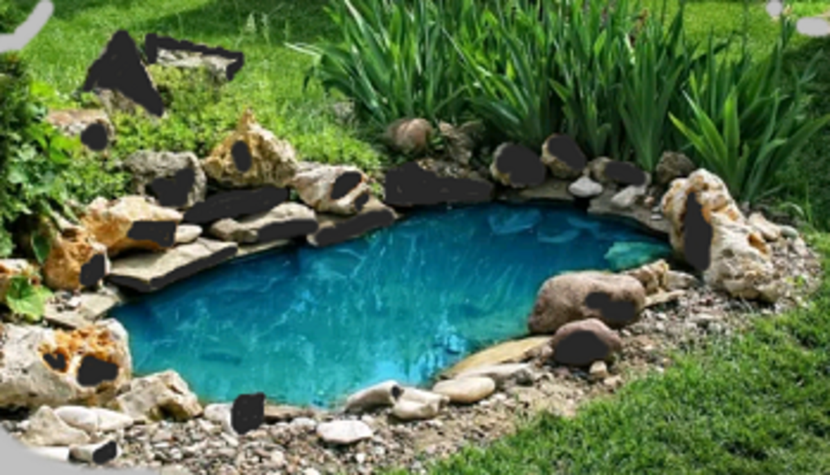 a pond kept free from dirt