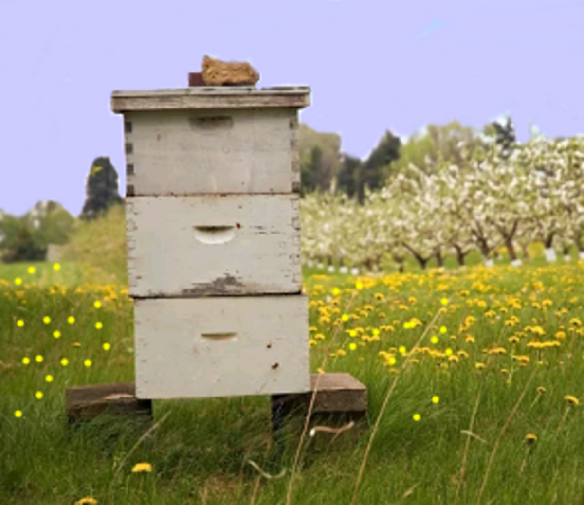 a beehive that needs maintenance