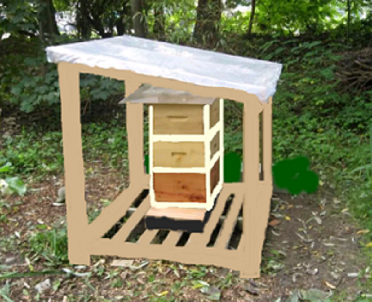 a hive with a shelter