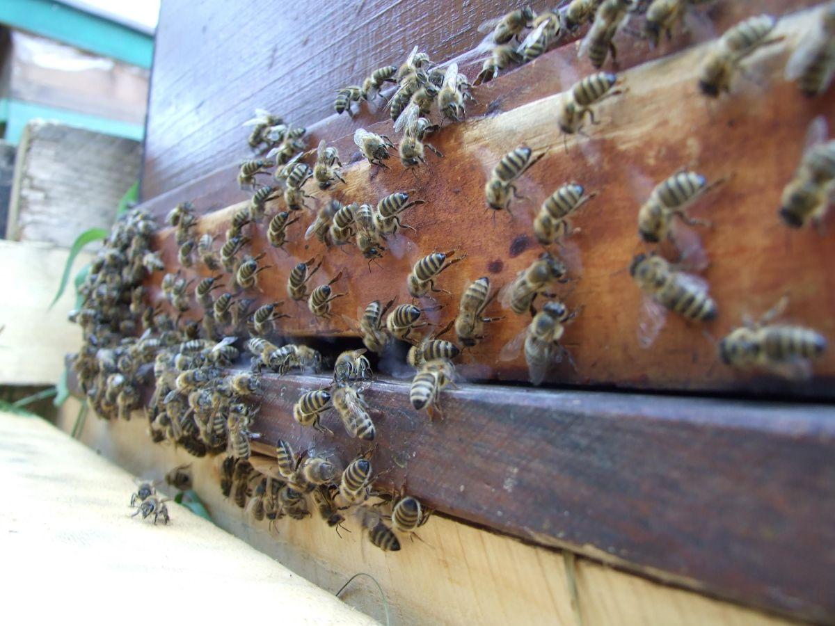 bees nesting outside due to an unfavorable weather condition.